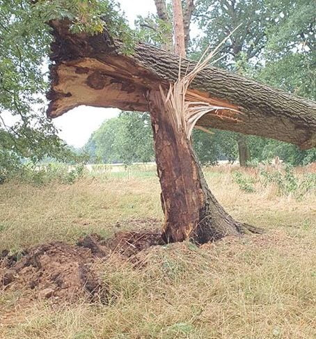 Safety fears after Watford park hit by storms